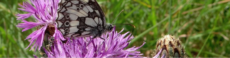 Photographies - Nature - Eynolez Pictures