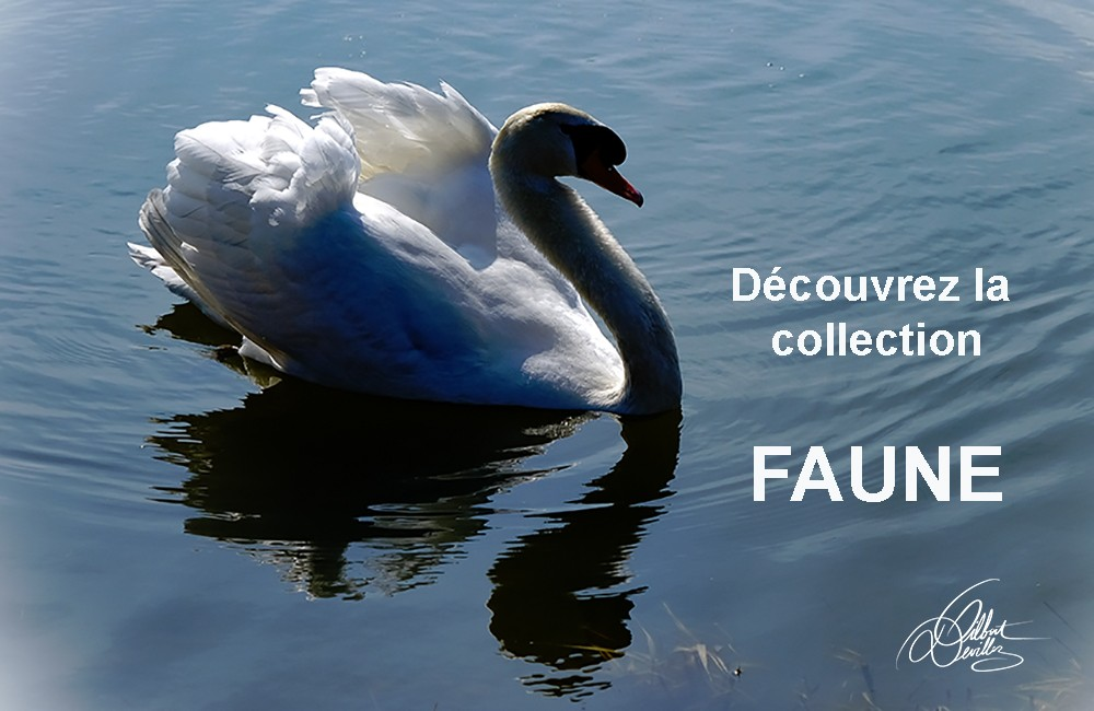 Collection Faune